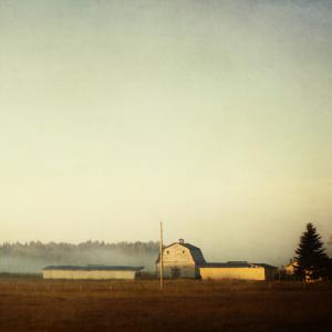 Sun on the Barn by Roberta Murray