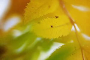 Sunshine Leaves by Roberta Murray