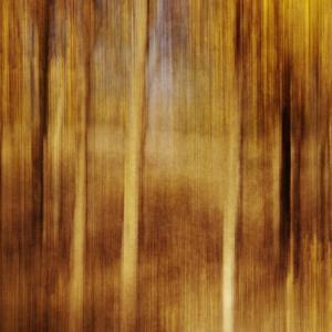 Sweeping Souls by Roberta Murray