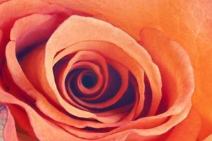 Swirl by Roberta Murray