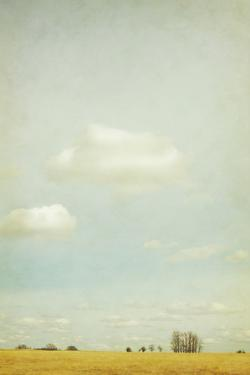 The Vaulted Sky by Roberta Murray