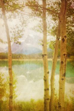 Waterfowl Lake by Roberta Murray