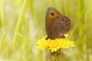 Weeds Make Nectar by Roberta Murray