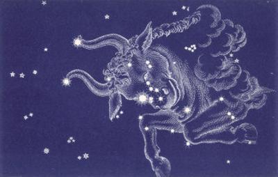 Taurus by Roberta Norton