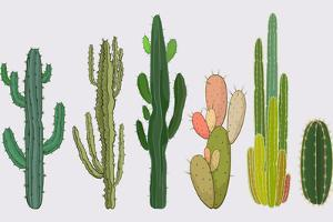 Cactus Collection in Vector Illustration by Roberto Chicano