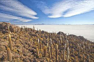 An Amazing View from the Top of the Isla Incahuasi, Salar De Uyuni, Bolivia, South America by Roberto Moiola