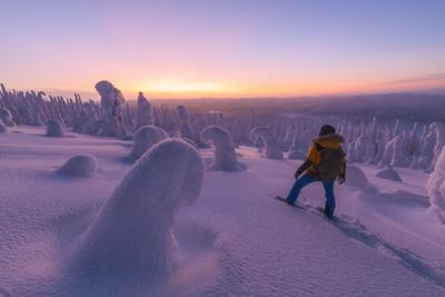 Hiker in the snowy forest at dusk, Riisitunturi National Park, Posio, Lapland, Finland by Roberto Moiola