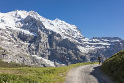 Hiker on the path between green meadows and snowy peaks, Wengernalp, Wengen, Bernese Oberland, Cant by Roberto Moiola