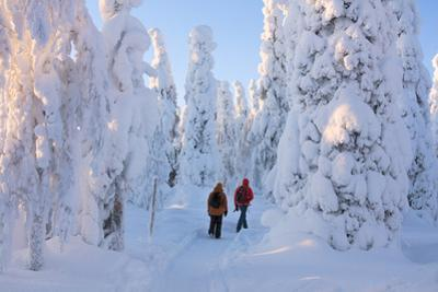 Hikers on path in the snowy woods, Riisitunturi National Park, Posio, Lapland, Finland by Roberto Moiola