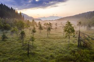 Lone trees in the misty landscape of Pian di Gembro Nature Reserve, Aprica, Italy by Roberto Moiola