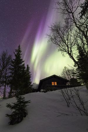 Northern Lights (Aurora borealis) over wood hut, Grovfjord, Troms county, Lofoten Islands, Norway by Roberto Moiola