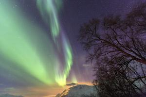 Northern Lights on the Icy Landscape of Svensby, Lyngen Alps, Troms, Lapland, Norway, Scandinavia by Roberto Moiola