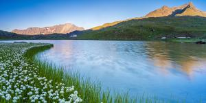 Panoramic of Monte Gavia mirrored in Lago Bianco surrounded by cotton grass, Italy by Roberto Moiola