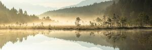 Panoramic of trees mirrored in Pian di Gembro Nature Reserve during a misty sunrise, Aprica, Italy by Roberto Moiola