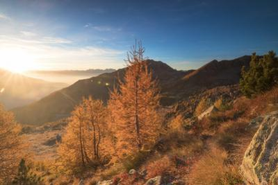 Sunburst on colorful larches during fall season, Alpe Arcoglio Valmalenco, Valtellina by Roberto Moiola