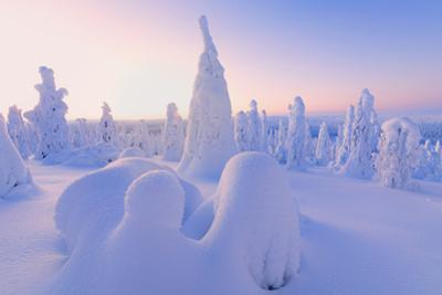 Sunrise on frozen trees, Riisitunturi National Park, Posio, Lapland, Finland by Roberto Moiola