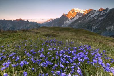 Violet flowers and green meadows frame the Mont Blanc massif at dawn, Graian Alps, Courmayeur, Aost by Roberto Moiola