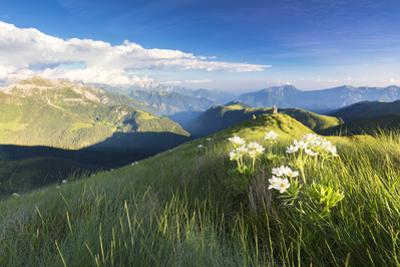 Wild flowers on crest towards Monte Azzarini with Bergamo Orobie Alps, San Marco Pass by Roberto Moiola