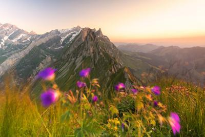 Wild flowers on top of Schafler with the rocky peak Santis in the background, Appenzell Innerrhoden by Roberto Moiola