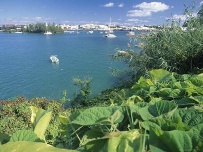 Hamilton Harbor with Greenery by Robin Hill