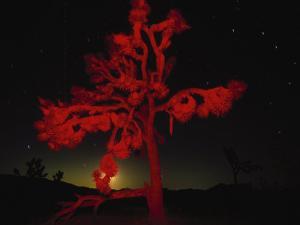 Joshua Tree National Monument, CA by Robin Hill
