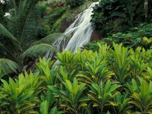 Shaw Park Gardens, Jamaica, Caribbean by Robin Hill