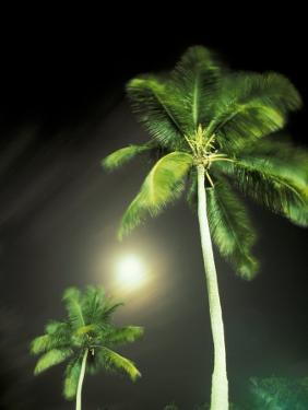 Tropics Palm Trees and Moon by Robin Hill