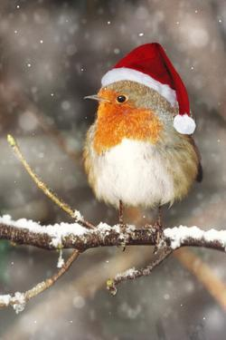Robin in Falling Snow Wearing Christmas Hat