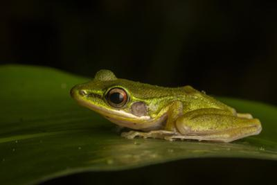 A Frog Rests on a Leaf by Robin Moore