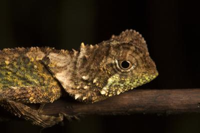 A Lizard Rests on a Tree Branch by Robin Moore
