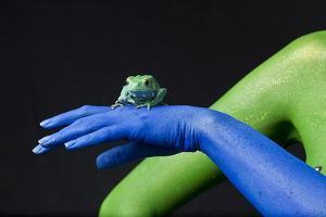 A Waxy Monkey Frog, Phyllomedusa Sauvagii, Sits on a Blue Hand by Robin Moore