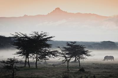 White Rhinos Appear Out of the Mist in Front of Mount Kenya by Robin Moore