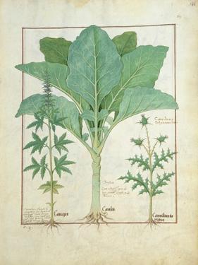 Cannabis by Robinet Testard