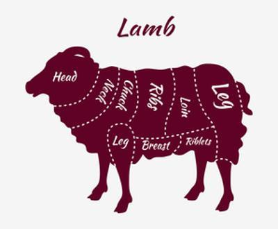 Cuts of Lamb or Mutton Diagram by robuart