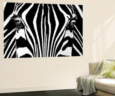 Rocco Sette Black and White Zebra Mural