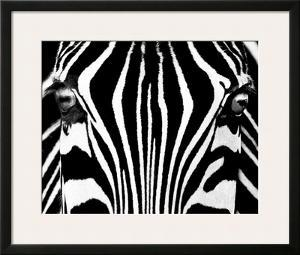 Black & White I (Zebra) by Rocco Sette