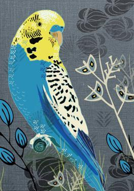 Budgie by Rocket 68