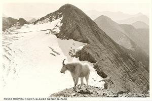 Rocky Mountain Goat, Glacier