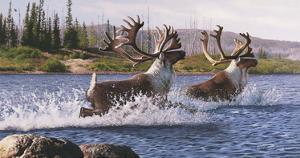 Caribou Crossing by Rod Lawrence
