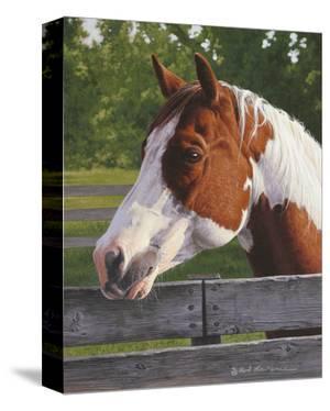 Shotzie - Horse Portrait by Rod Lawrence