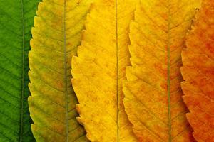 Close Up of Autumn Leaves by rodho