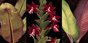 Red Orchids and Palm Leaves by Rodolfo Jimenez