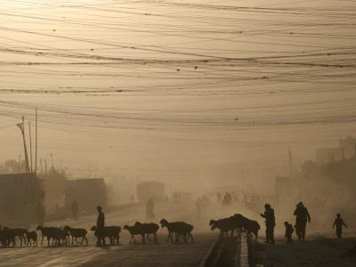 Afghan Herders Lead Their Livestodk Across a Road in Kabul, Afghanistan, Monday, Oct 9, 2006
