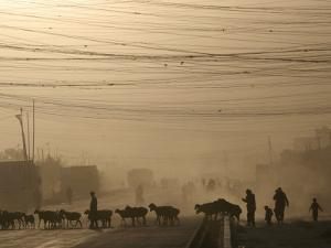 Afghan Herders Lead Their Livestodk Across a Road in Kabul, Afghanistan, Monday, Oct 9, 2006 by Rodrigo Abd