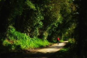 A Man Cycles Along a Leafy, Sun-Freckled Lane Near Winchelsea, East Sussex by Roff Smith