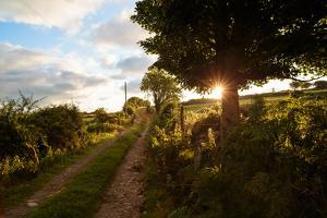 Sunrise on a Country Lane Near Rhostryfan, in Northern Wales by Roff Smith