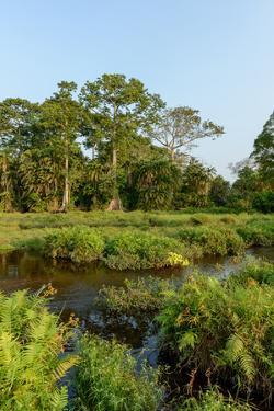 Lango Bai. Odzala-Kokoua National Park. Congo by Roger De La Harpe