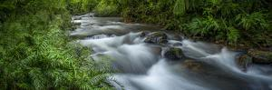 Mountain river. Forest interior. Bwindi Impenetrable Forest. Uganda by Roger De La Harpe