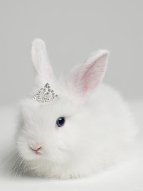 White Bunny Rabbit Wearing Tiara, close Up, Studio Shot by Roger Wright