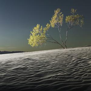 Usa, California, Death Valley, Tree in Desert by Roine Magnusson
